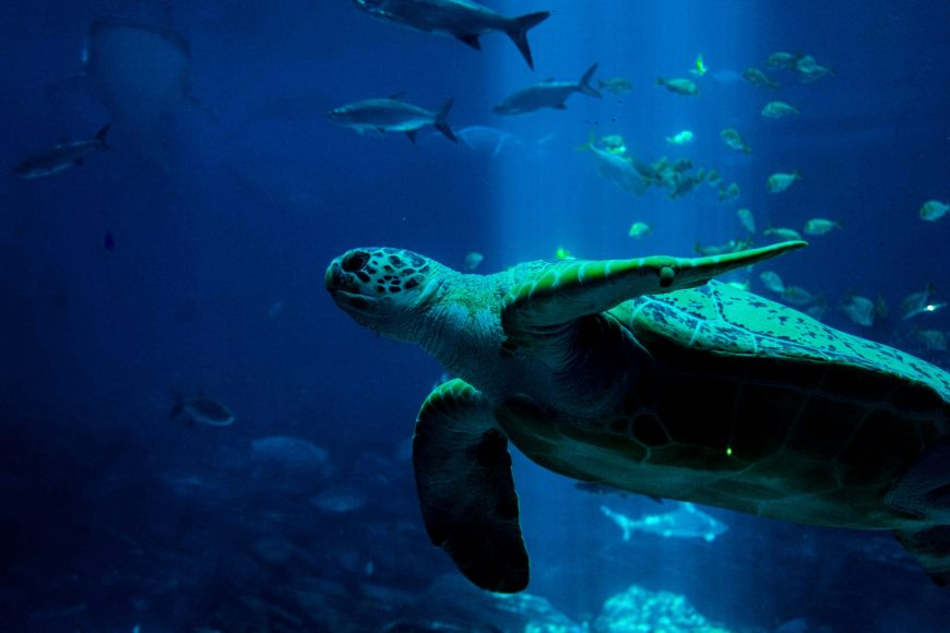 Meeresschutz